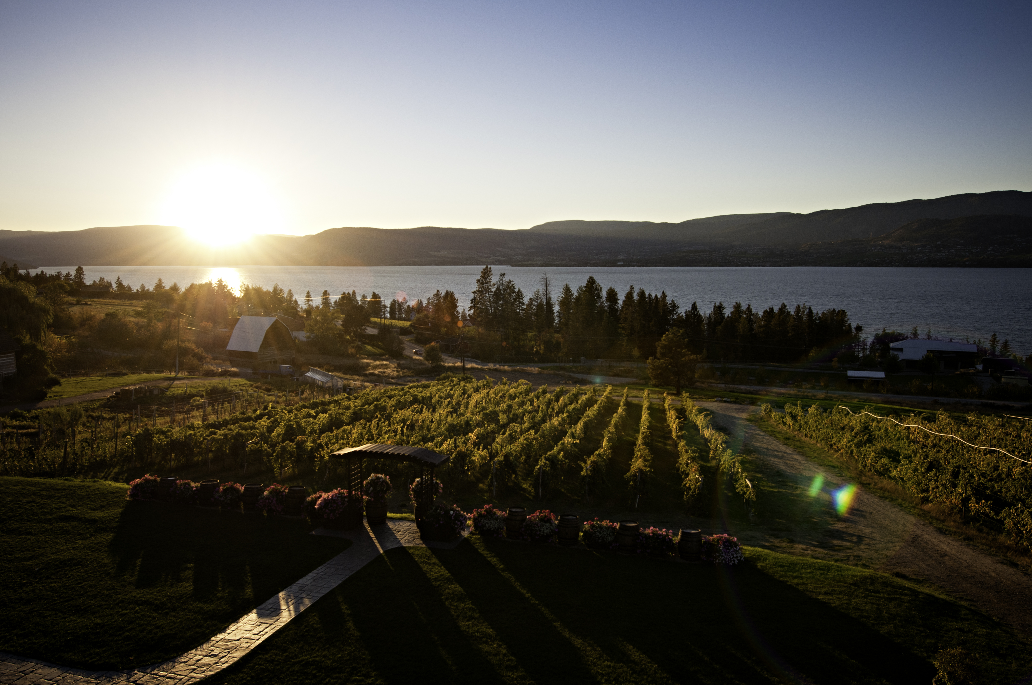 Wine not? Province working to regulate its organic sector, wine community onboard
